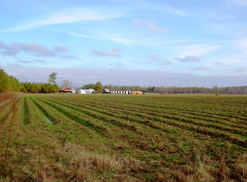 Averett-Farm-Field