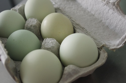 Image result for Araucana green eggs