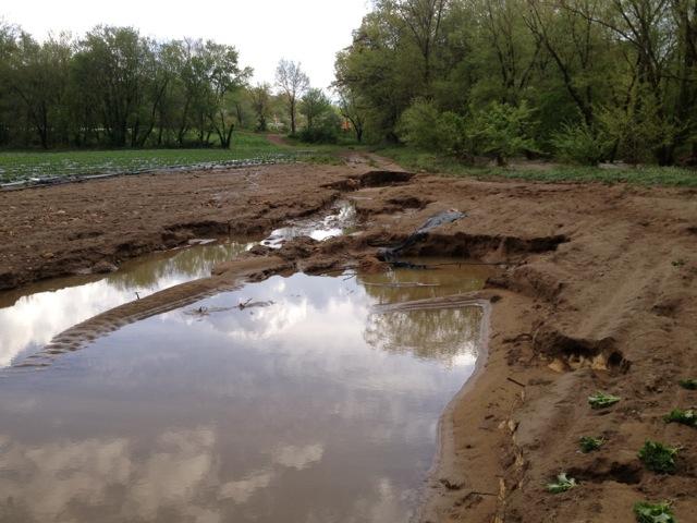 flooded fields 2013 (2)