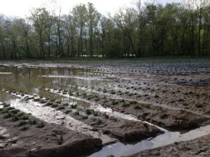 flooded fields 2013 (3)