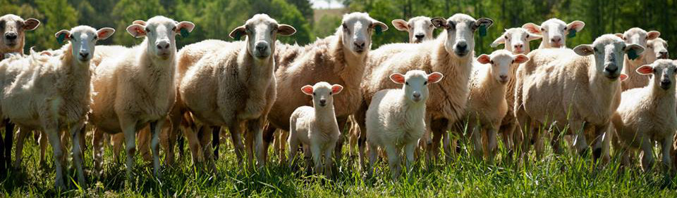 Q&A on Sustainable Farming with Roland McReynolds | Carolina