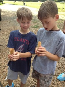 Homestead Harvest Farms Chicks