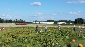 U-Pick pumpkins at Vollmer Farm