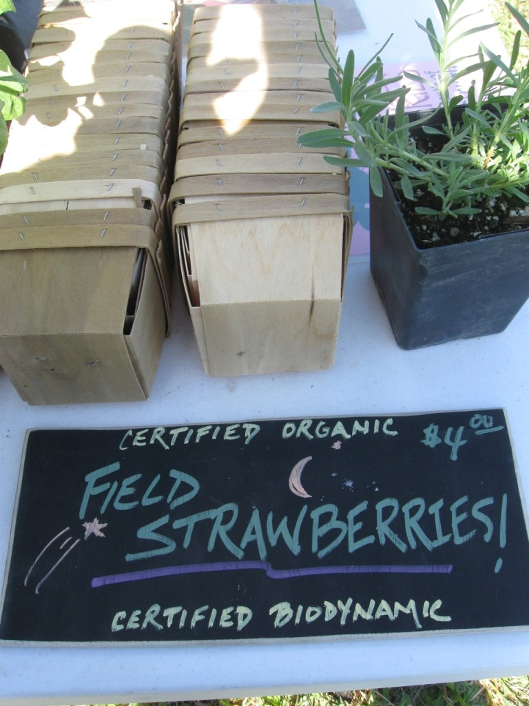 Whitted Bowers Strawberries