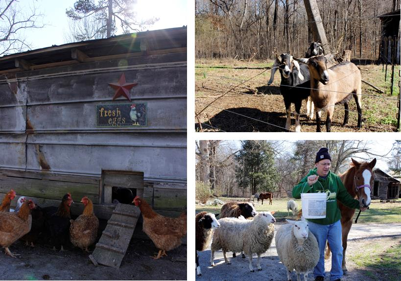 Blog | Carolina Farm Stewardship Association | Page 17