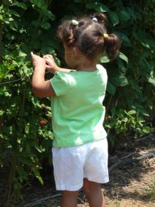 Happy Berry Farm