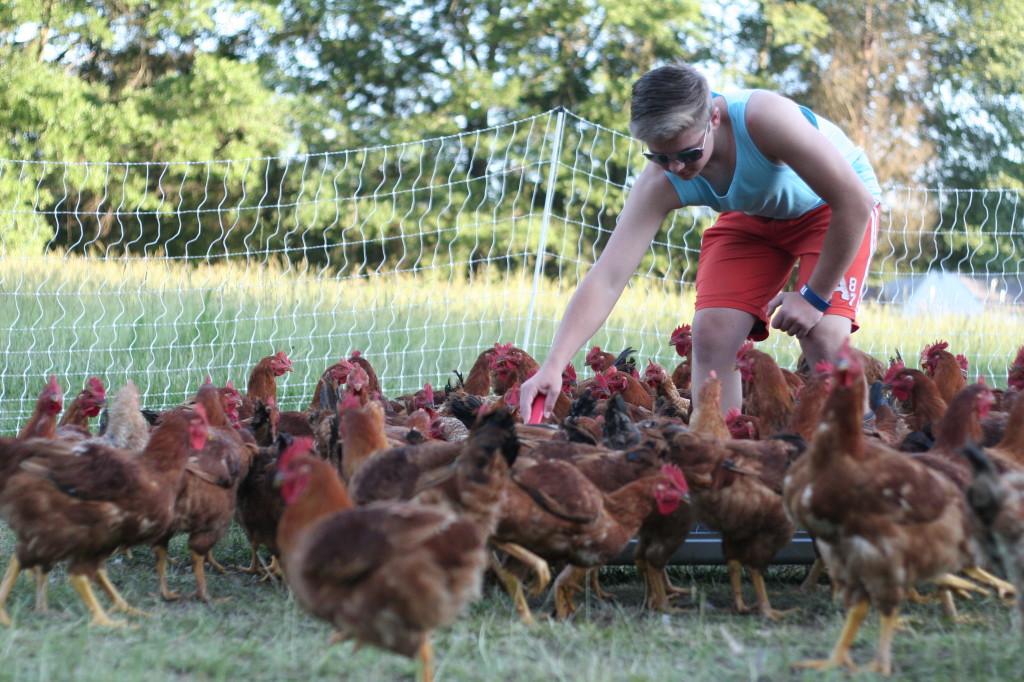 Kornerstone Farm (1)