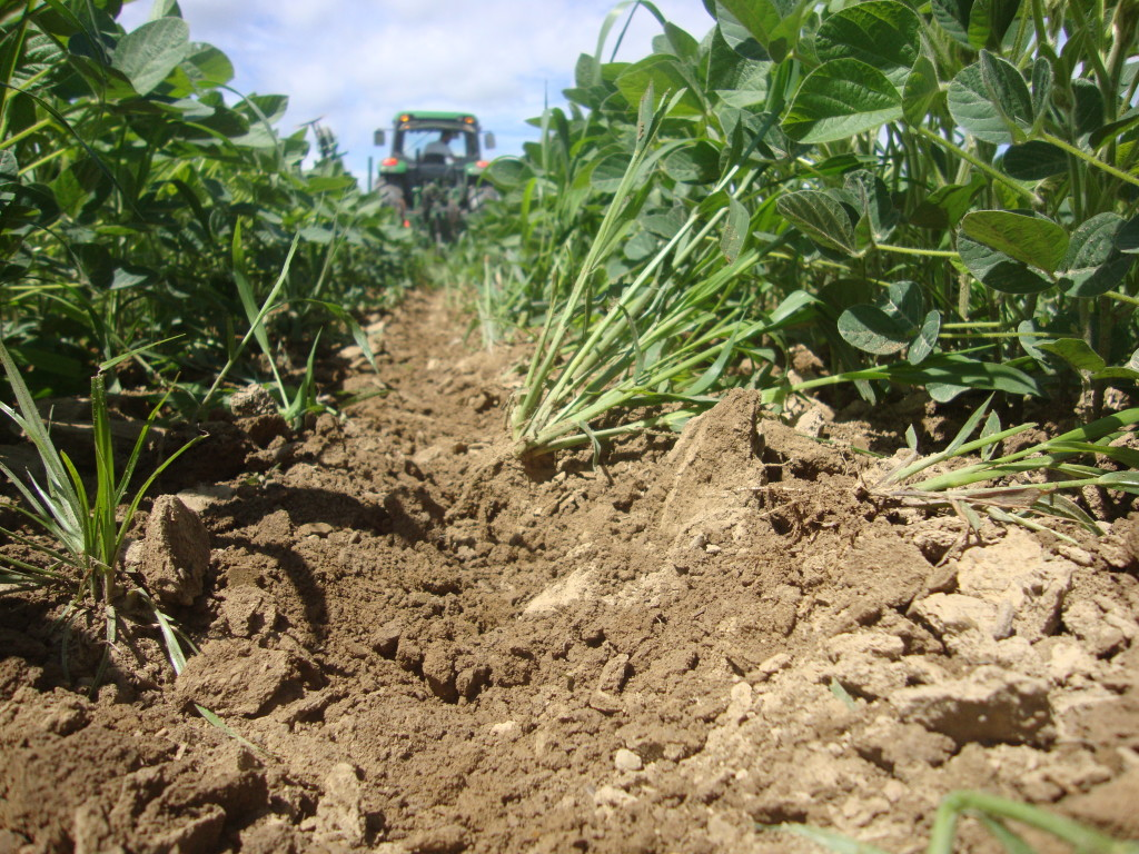 Cultivating weeds once the crop is up.  Photo by Claire Keene