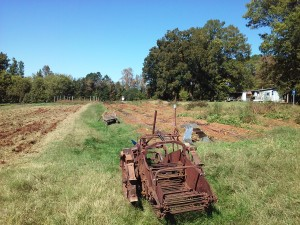 Marc uses an antique potato digger to harvest his sunchokes at Lomax Farm Photo submitted by Angie Olear