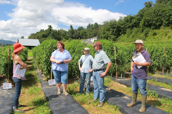 A number of TOMI project partners discuss variety trials at an NC State research station in August 2016. Pictured here (left to right) Micaela Colley (OSA), Jeanine Davis (NC State), Julie Dawson (University of Wisconsin), Jim Myers (Oregon State University), and Luping Qu (NC State).