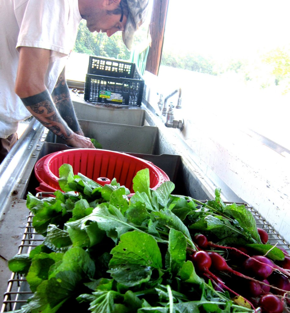 Dylan Alexander of Alexander Acres, one of the Farmers in Training at Lomax Incubator Farm, washes greens post-harvest.
