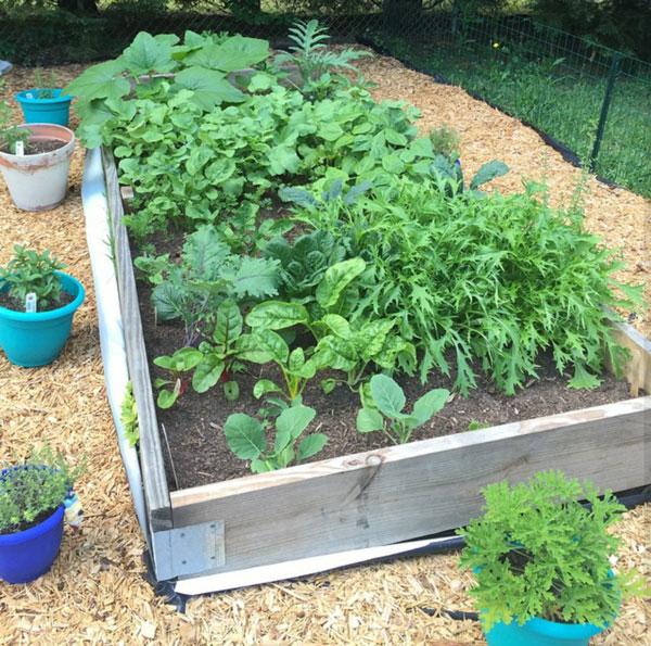 Lauren's-garden