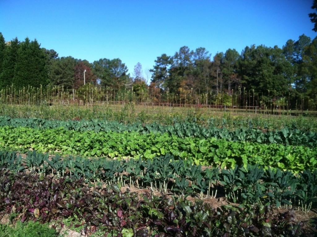 Plow Girl Farm