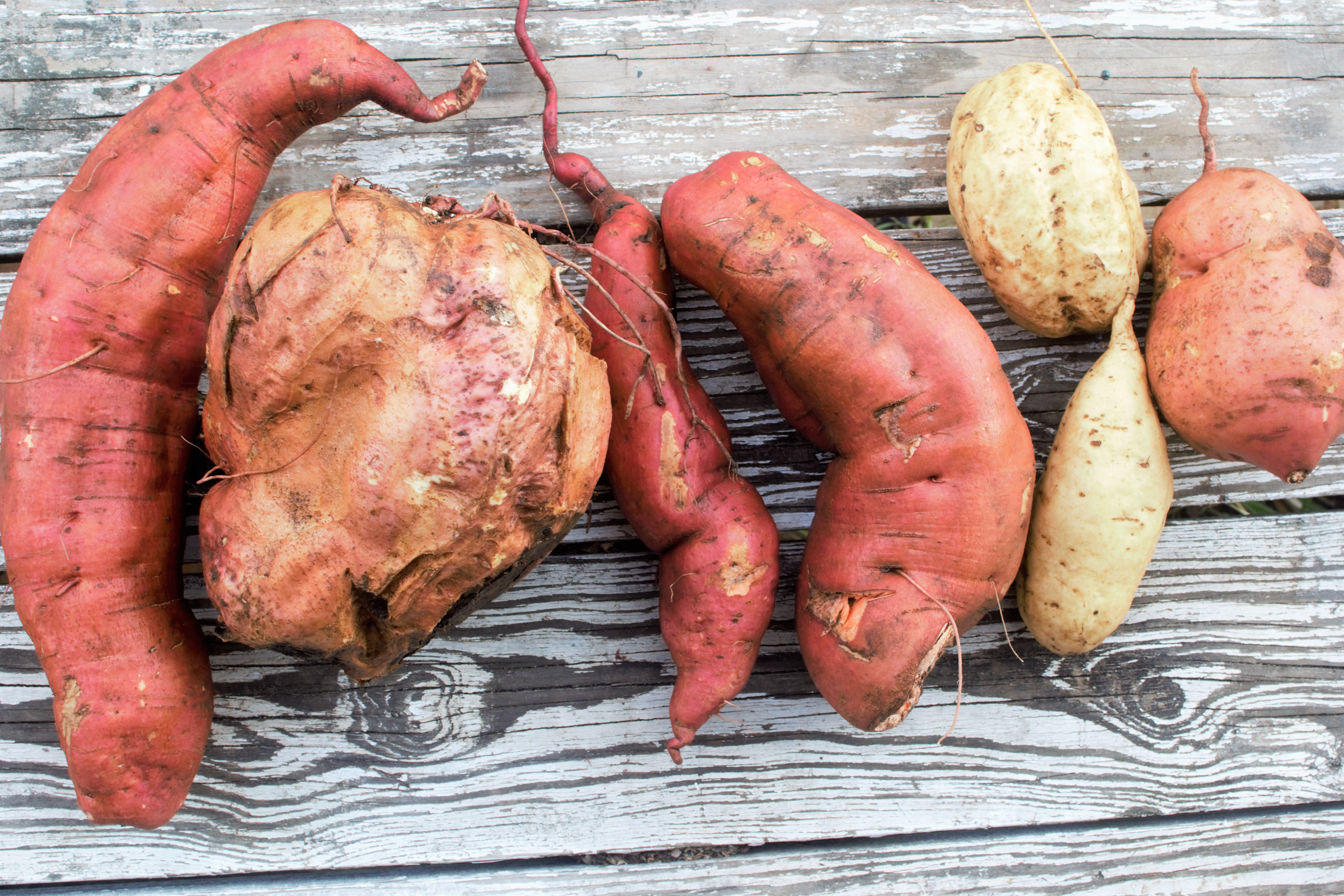 Sweet Potatoes image - Cathy Cleary