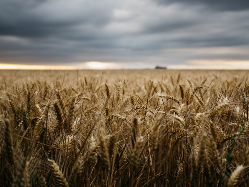 A Breakdown of North Carolina's Farm Act of 2018   Carolina