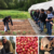 Collage: students learning about vegetable beds, apple harvest, Reverence Farms, baby pig at Sylva Farm
