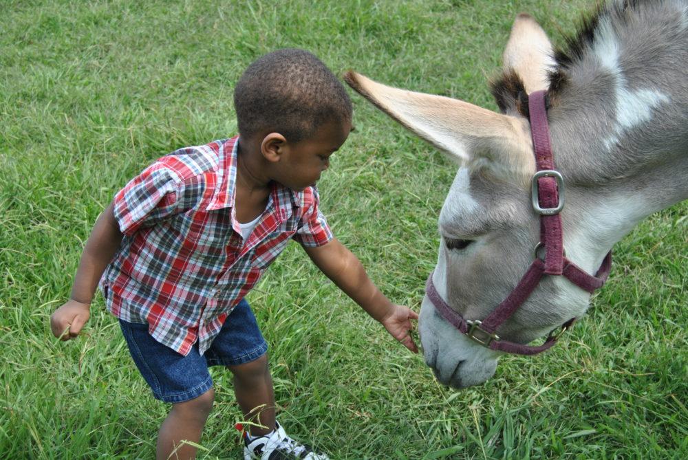 Little boy petting a donkey at Hundred Acre Wood. Credit: Stephanie Morrison