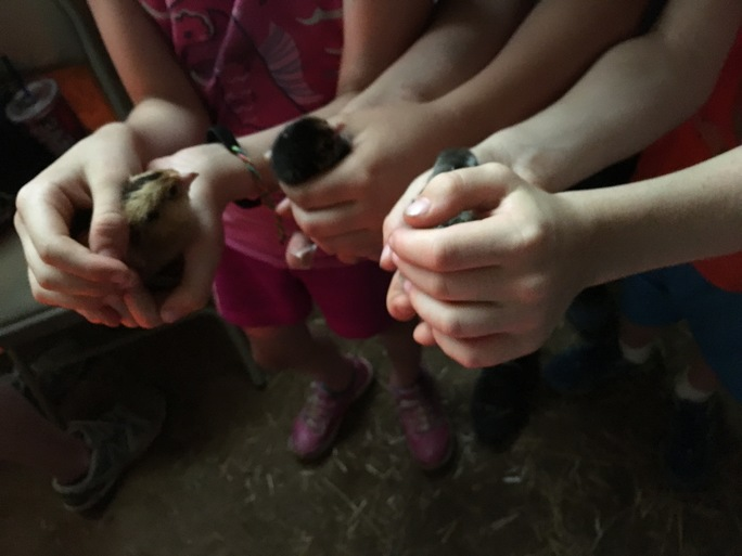 School kids hold baby chicks while on a visit to Minka Farm in Efland